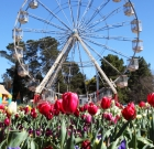 Be sure to see Canberra in bloom